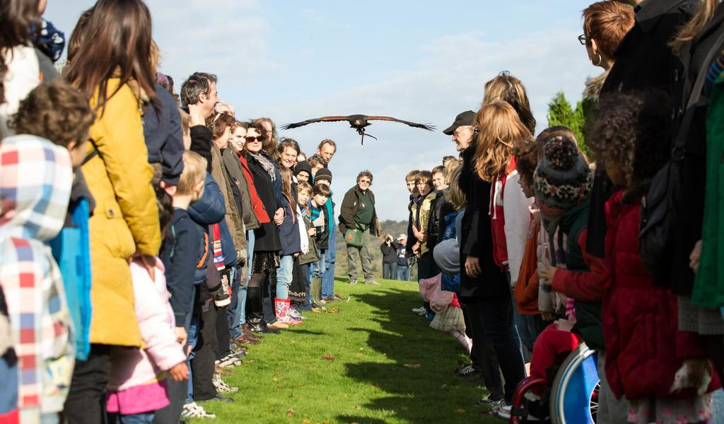 Image: Crowd watching a falconry display